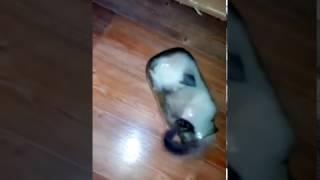 Кот катается в банке