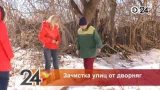 В Казани началась зачистка улиц от бездомных животных