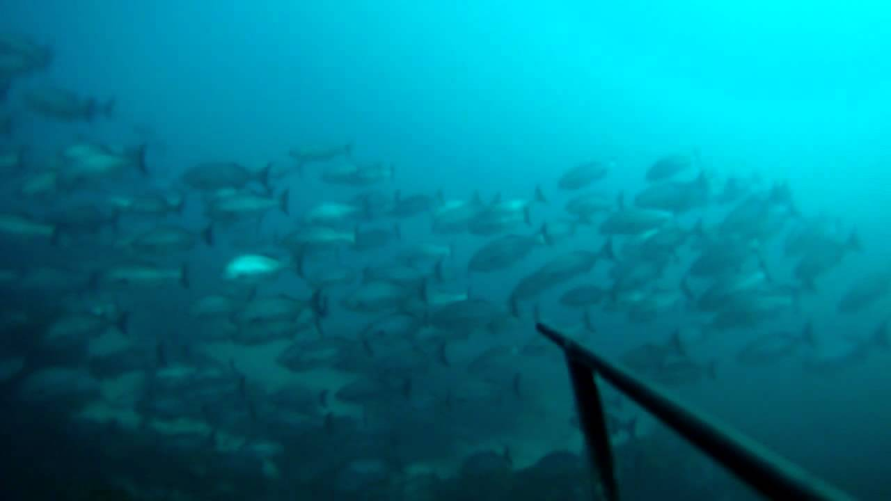 spearfishing hells gates