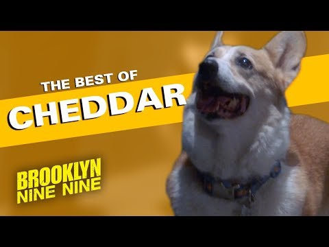 The Best of Cheddar | Brooklyn Nine-Nine