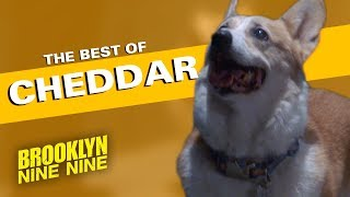 The Best of Cheddar | Brooklyn Nine-Nine