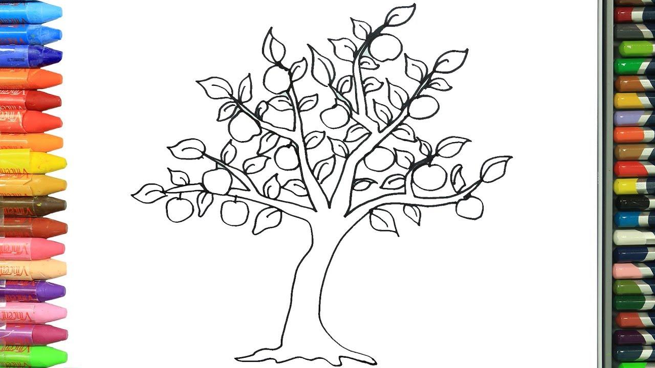 Cómo Dibujar Y Colorear árbol De Manzana Dibujos Para Niños Aprender Colores