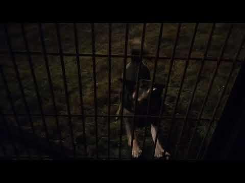 ЛО: Джек - грустный пёс у канала