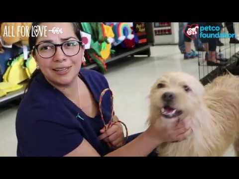 Dog named Kelso adopted at a Petco Store