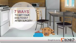 Dog Surgery Recovery 7 Ways to Get a Dog to Eat