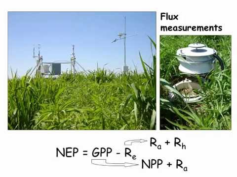 An Ecological Perspective on the Promise and Challenges of Biofuels