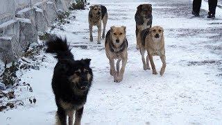 На Ставрополье открыли самый большой приют для животных