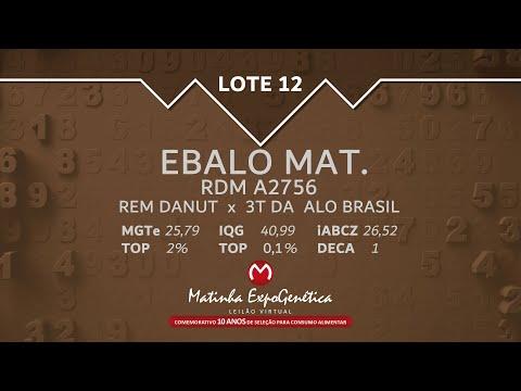 LOTE 12 MATINHA EXPOGENÉTICA 2021