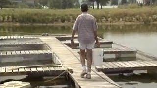 Cage Culture: Raising Fish in Ponds
