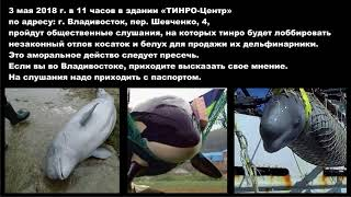 ТИНРО Владивосток лоббирует незаконный вылов косаток и белух