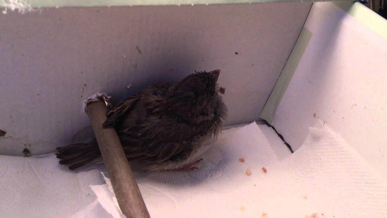 объявления если голубь бросил птенцов как заботиться видами