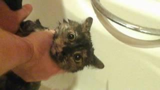 Смешное видео про маю кошку МАРУСЮ МОЮТ В ВОДЕ!СМОТРЕТЬ ДО КОНЦА!