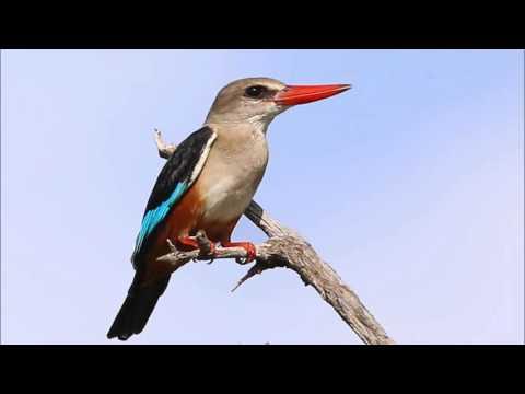 Birding in the Gambia nov 2015