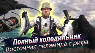 Морские рыбы ЛОМАЮТ катушки Вост Китайское море Восточная пеламида Морская рыбалка 2018 12