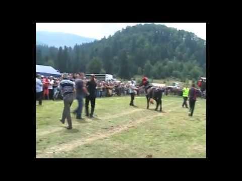 Liberta ali   Кючек на кон.