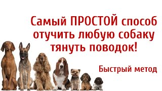 Самый ПРОСТОЙ И БЫСТРЫЙ способ, который отучит собаку тянуть поводок! Секреты дрессировки.