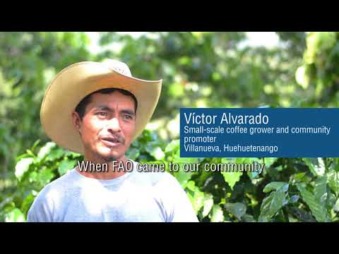 Coffee, entrepreneurship, and community-driven promotion: productive livelihoods without migration