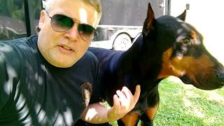 Doberman Pinscher 2 MOST IMPORTANT Things for a Happy Healthy Dog