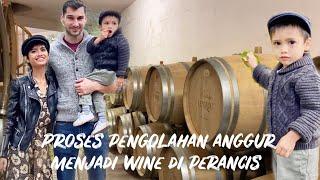 Download lagu PROSES PENGOLAHAN ANGGUR MENJADI WINE DI PERANCIS - BUTUH 3 TAHUN UNTUK RED WINE, BARU BISA DIJUAL