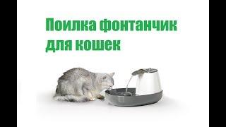 Фонтан Поилки Для кошек  Питьевые Фонтанчики & Кошка Не Пьет Воду  Что Делать. Ветклиника Био-Вет