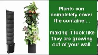 Indoor Living Wall Planter - Made Easy