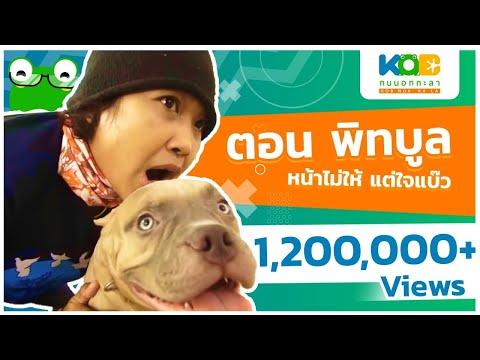 พิทบูล หมาแบ๊วสายพันธุ์ดุ - Full - วันที่ 26 Jan 2018