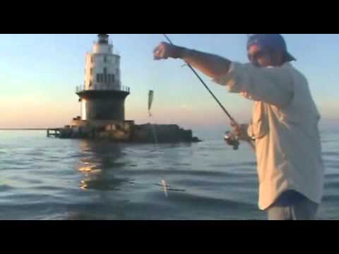 Fishing the walls off cape henlopen first light charters for Cape henlopen fishing report