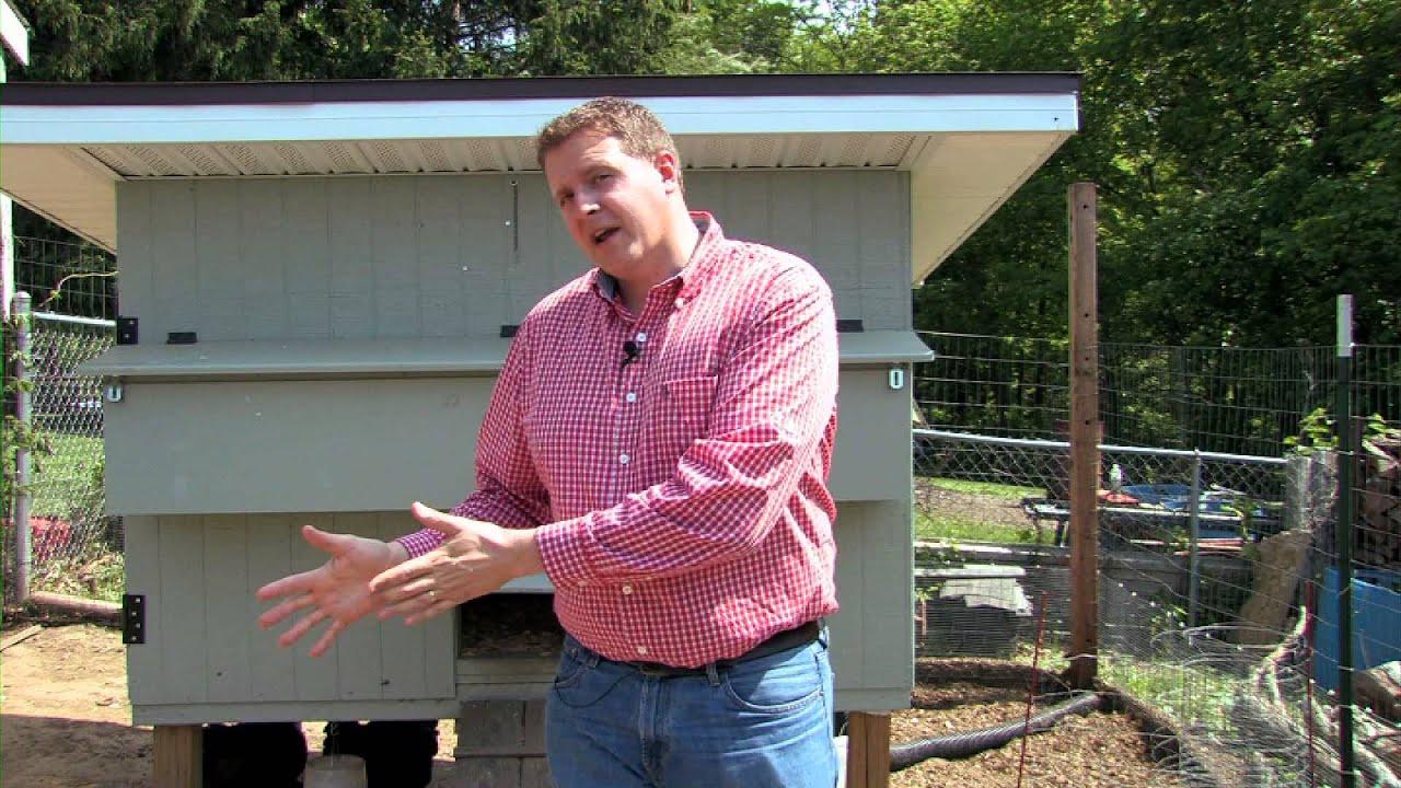 choosing a backyard chicken breed youtube