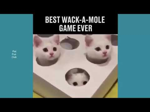 funny video cats and dogs compilation very amazing funny 2017