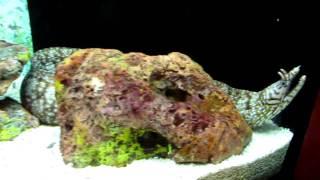 Чем не морской дракон? (шанхайский океанариум, 2010)(, 2011-01-31T15:11:04.000Z)