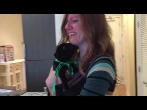 Danny the Pug Homecoming (Mommy gets a birthday surprise)