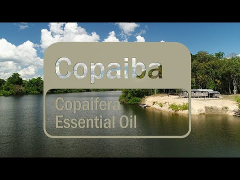 learn-about-the-benefits-of-doterra-copaiba-essential-oil