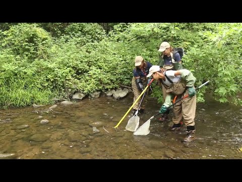 Fisheries Monitoring: Regional Rivers And Streams