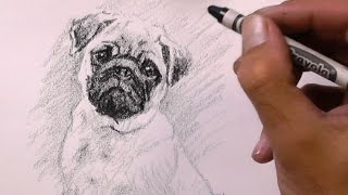 Pug Drawing With A Crayon