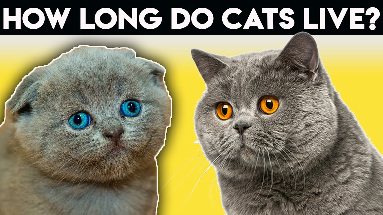 How Long Do Cats Live You Can Make A Difference Youtube