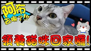 【Bonnie】阿布在哪裡?! - 養貓事前準備│邦妮終於要領養貓咪回家了 ! ! thumbnail