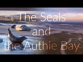 The Seals and the Authie Bay. Wildlife and drone shots near the Somme Bay, France
