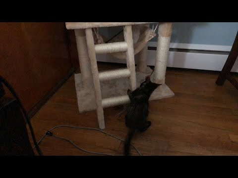 AUGUST 4th LIVE MORNING MISCHIEF - MY FACE IS A KITTEN TOY