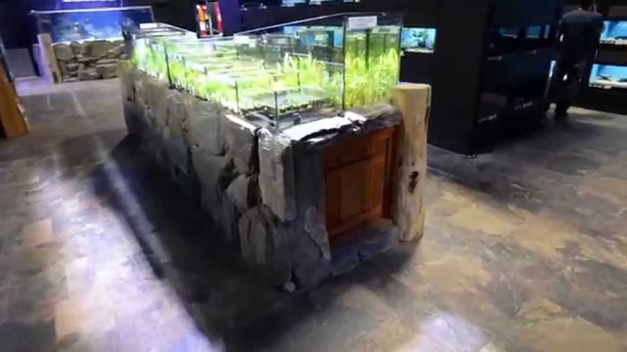 Fish aquarium edmonton - Big Al S Aquarium Supercentre Edmonton Store Tour Big Al S