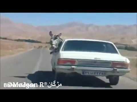 Lucky Iranian Donkey get Free Ride خر با پیکان در ایران thumbnail