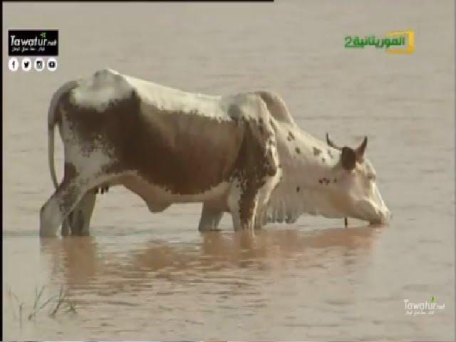الموسم الرعوي 2017.. بين توقعات الأرصاد ومخاوف المنمين  - قناة الموريتانية