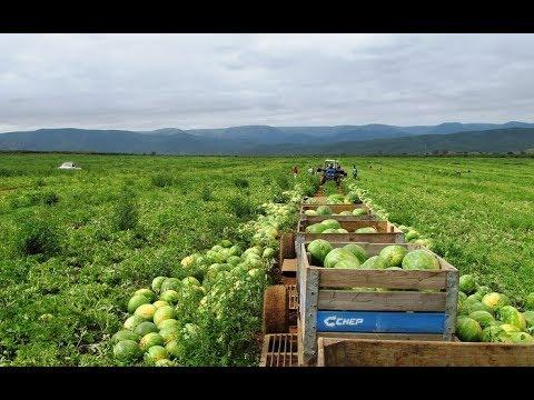 Gary Webb shares home gardening tips for fruits & vegetables