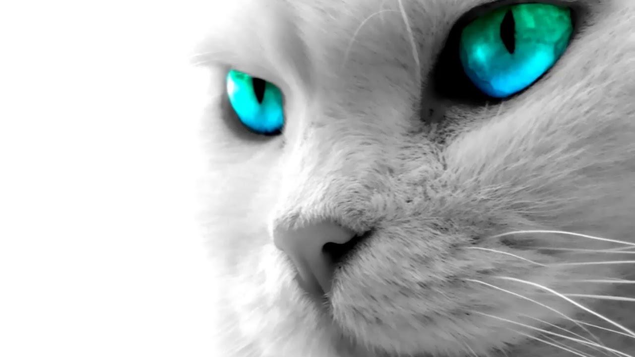 صوت قطة شرسة عالي ومخيف Youtube