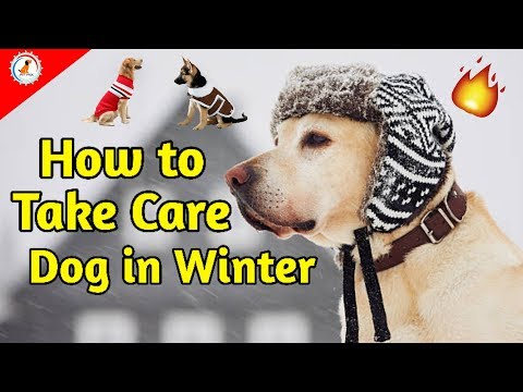 How to take care of dog in winter / Dog best tips for winter / Puppy winter care tips in Hindi