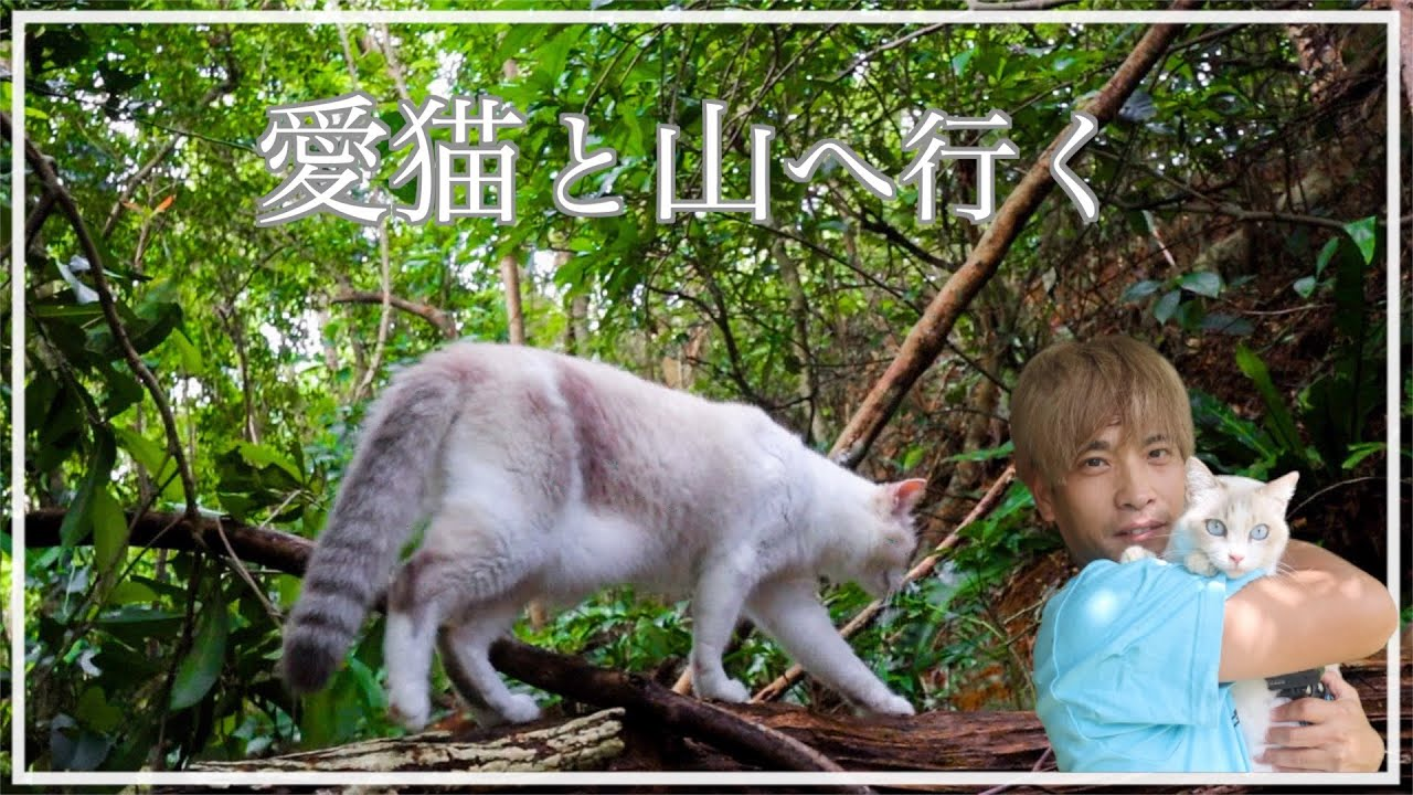 山へ散歩に行ったら帰りたくない〜と駄々をこねる猫が可愛すぎました【沖縄】