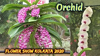 Beautiful Orchid Flower Exhibition    Agri - Horticulture Society of India - Flower Show 2020