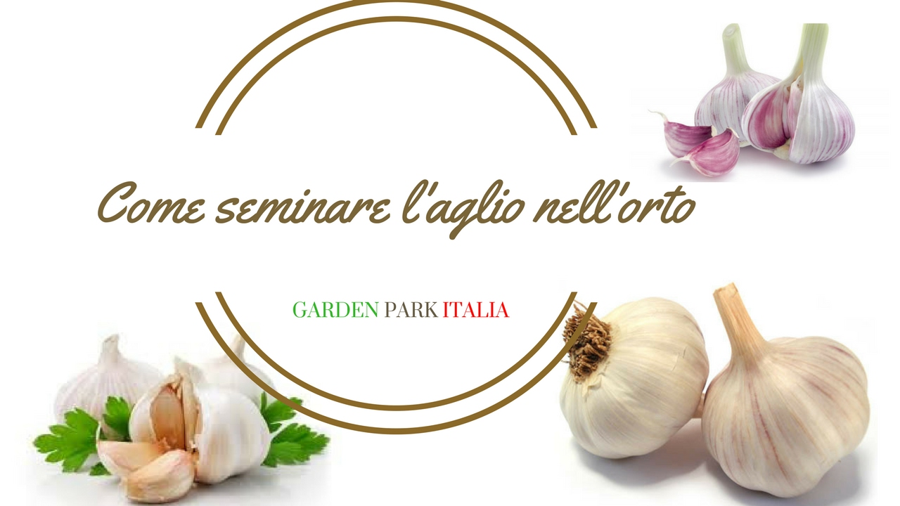 Come seminare l 39 aglio nell 39 orto youtube for Seminare aglio