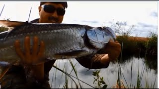 Tarpon Battle Tamiami Trail