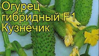 Огурец гибридный F1 Кузнечик. Краткий обзор, описание характеристик, где купить саженцы, семена
