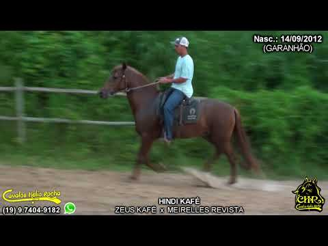 Cavalo Campolina from YouTube · Duration:  4 minutes 23 seconds